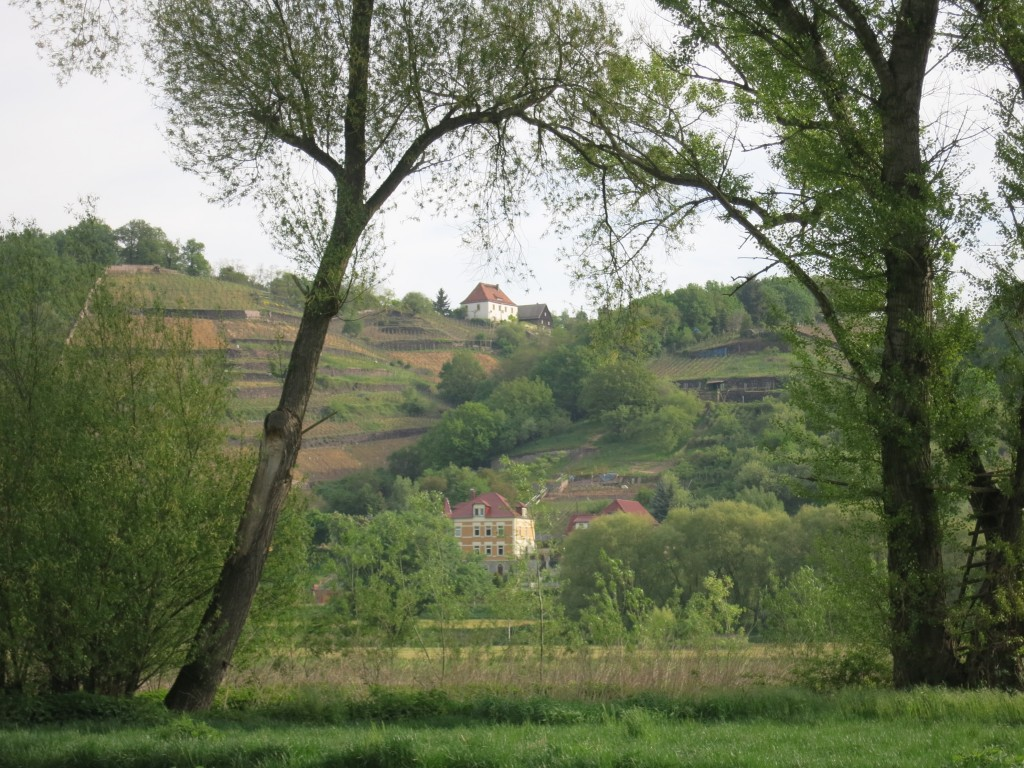 Along the Saxon Wine Road